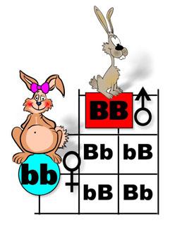 All homework biology schurz high school spongebob bikini bottom genetics 67 kb fandeluxe Gallery